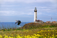 Pigeon Point Lighthouse - A Great Blue Heron Takes Flight