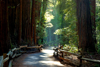 Walk in Heaven - John Muir Woods National Monument