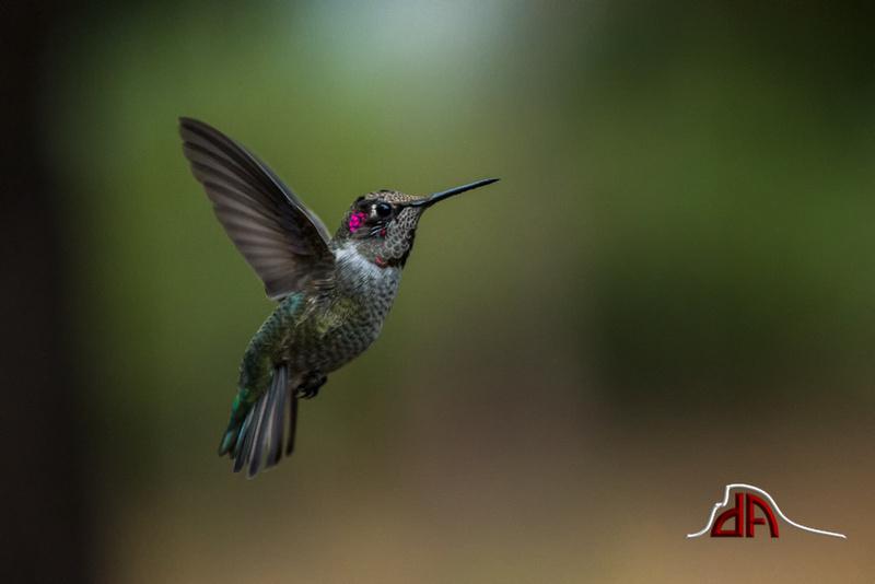 Yosemite Lanscapes Hummingbirds