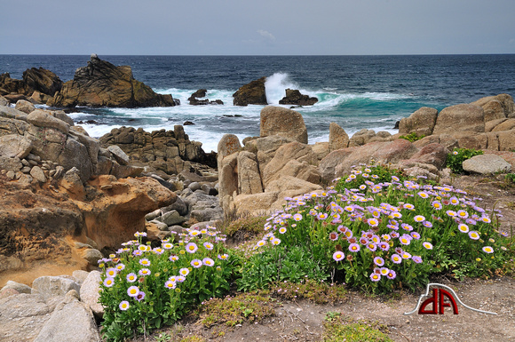 Flowers and Surf - Pebble Beach California