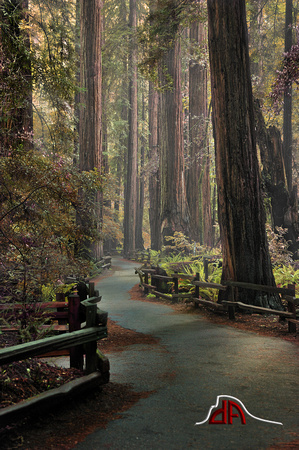 Muir Woods - Ancient Redwood Forest