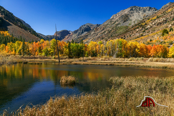 Autumn on the Beaver Pond - Lundy Canyon