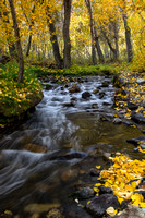 Autumn in the Sierra Mountains